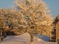 December 2010 005